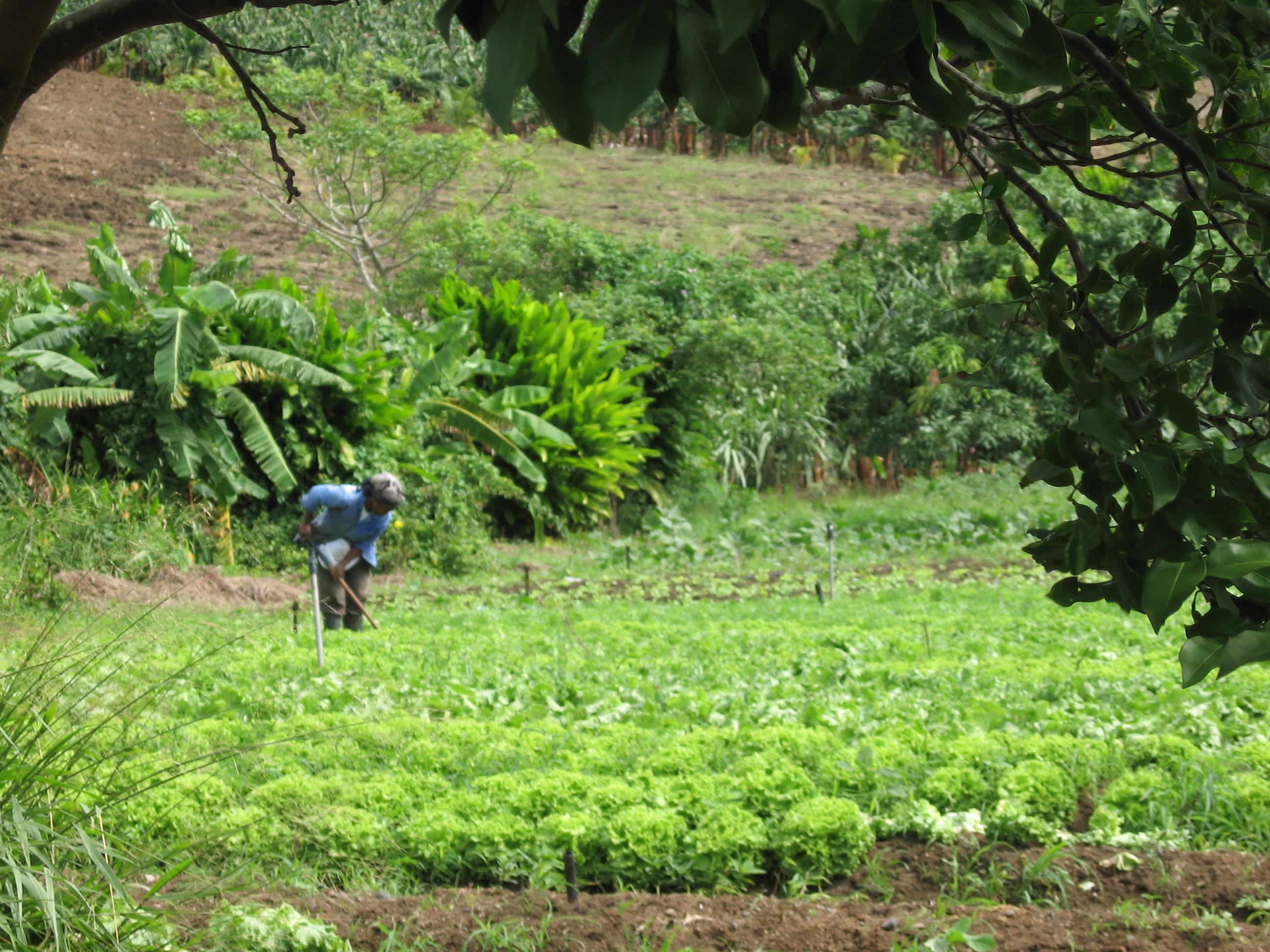 Compte rendu du forum organisé par le CMR Martinique