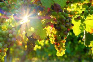 A la découverte des vins du roannais